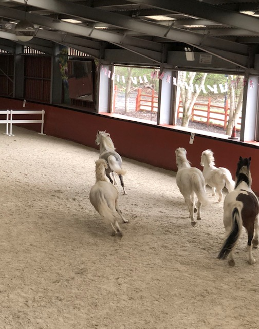 New Martin Collins surface for Wormwood Scrubs Pony Centre
